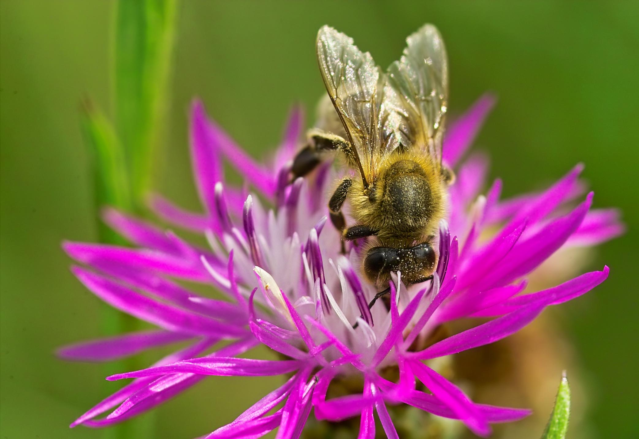 Deborah the bee part i grace in torah biocorpaavc